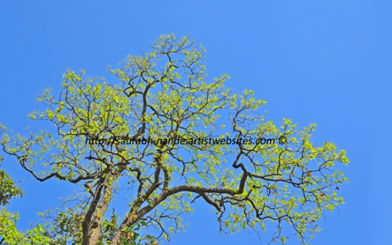 Tree against blue sky in spring